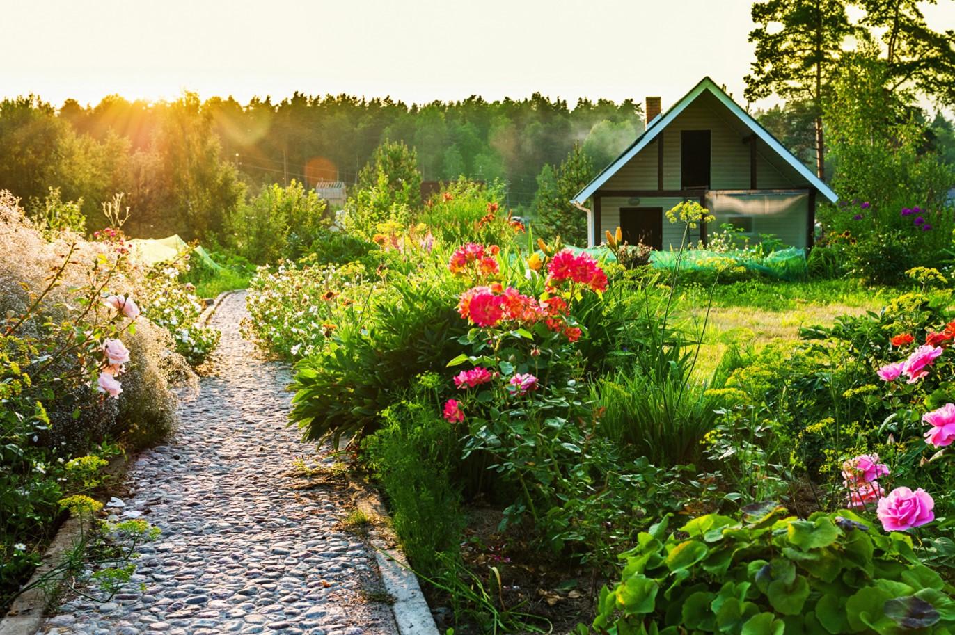 Домашний сад - почему он изменит вашу жизнь к лучшему?