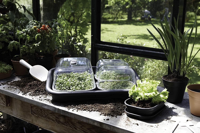 Мини-сад. Выращивание рассады в домашних условиях. Когда начать?