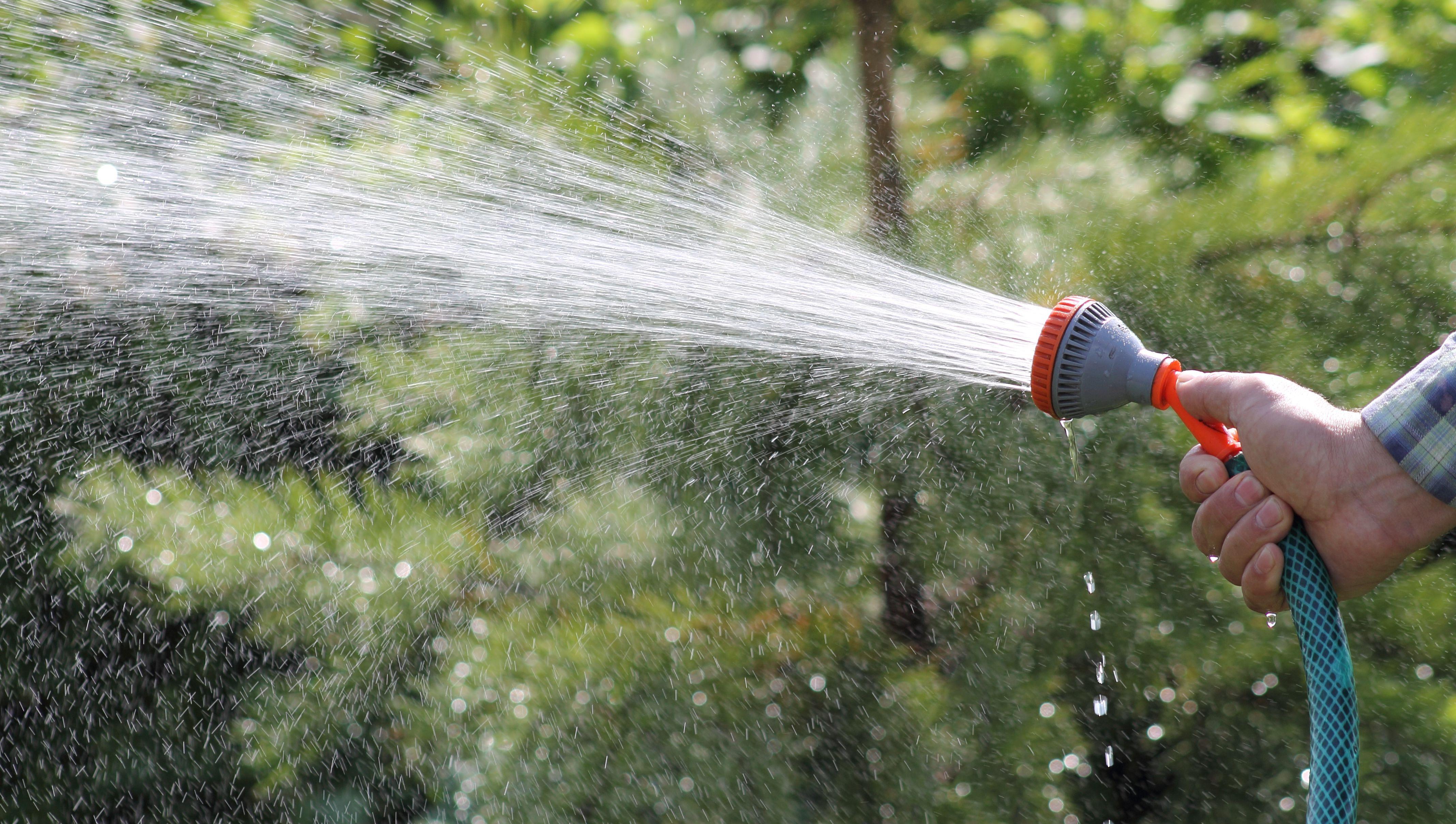 Полив - основа благополучия сада. Как правильно поливать деревья?