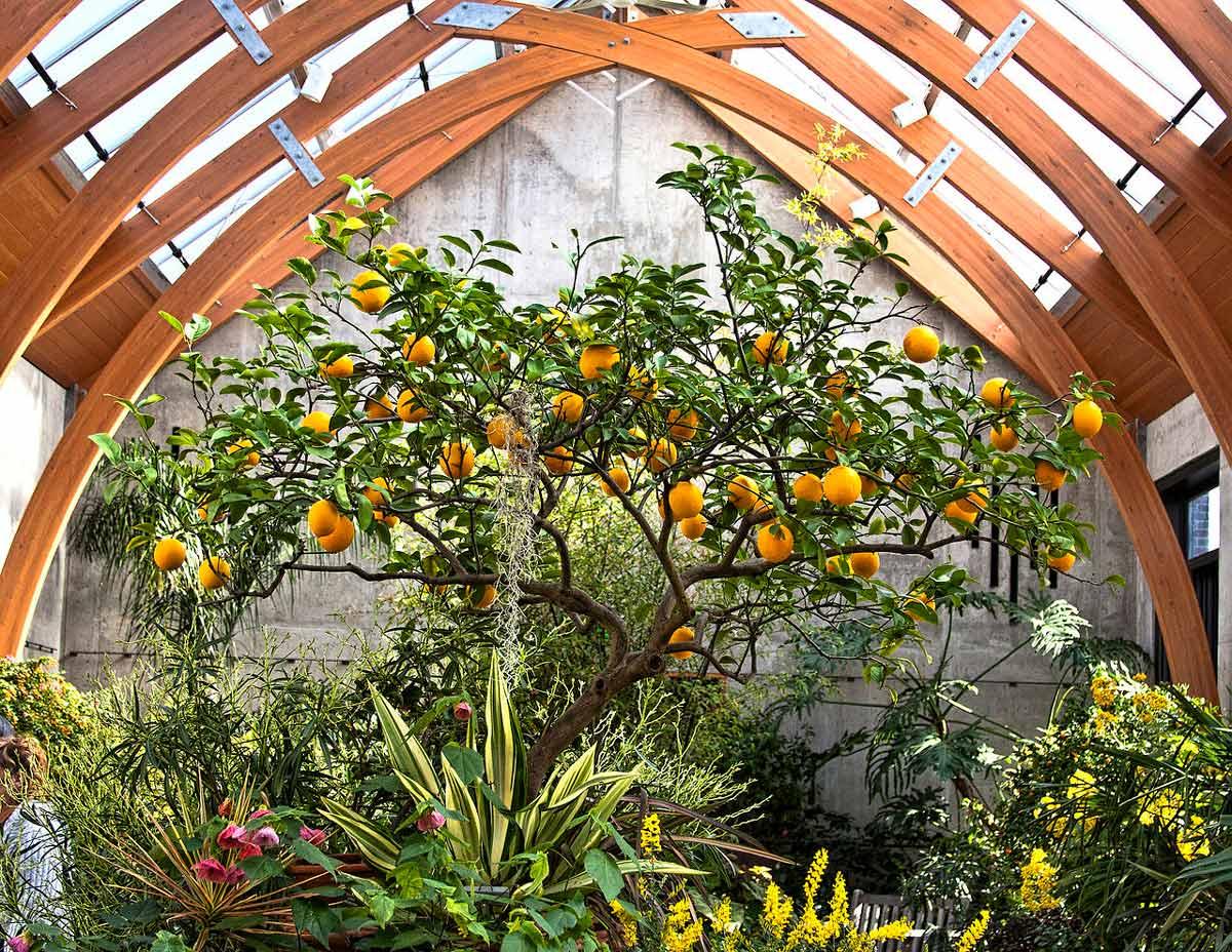 Обустройство зимнего сада в загородном коттедже