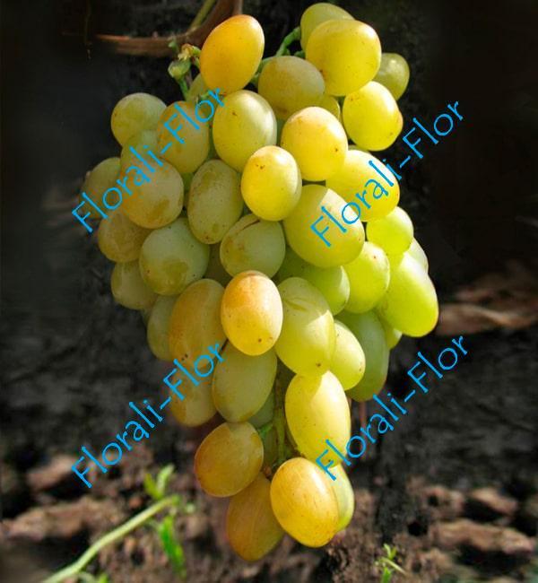 Виноград Супер- Экстра