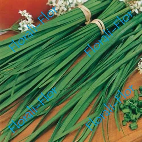 Лук Душистый Китайский чеснок 0,5 г