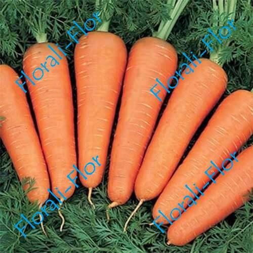 Морковь Базель F1 0, 5 г (Голландия)