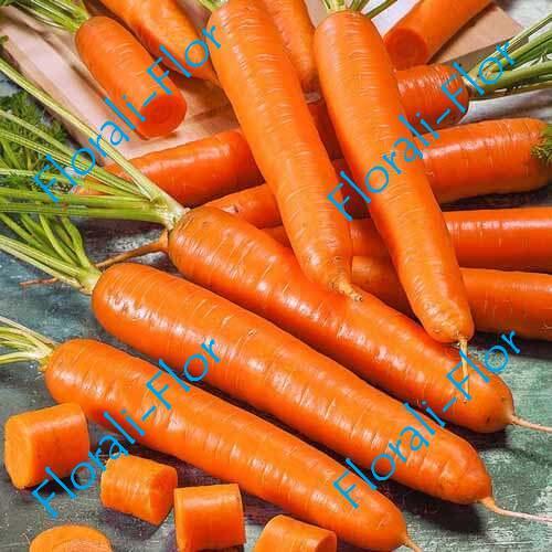Морковь Лонге Роте (Бессердцевинная) 0,5 г.