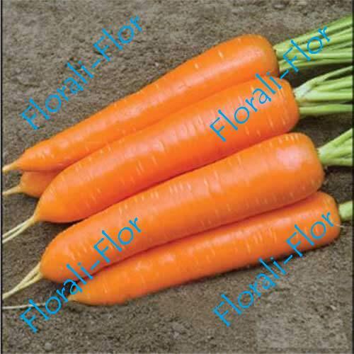Морковь Монанта 0,5 г (Голландия)