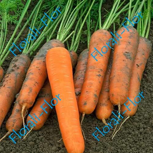 Морковь Найджел F1 0,5 г (Голландия)