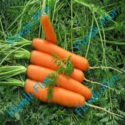 Морковь Нантская красная 0, 5  г