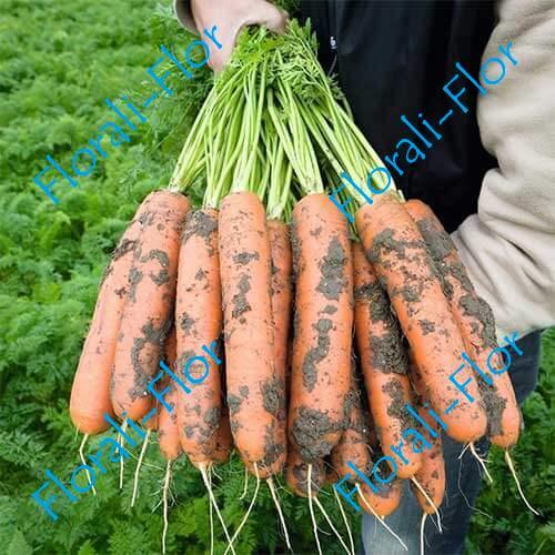 Морковь Нарбонне F1 0,5 г (Голландия)