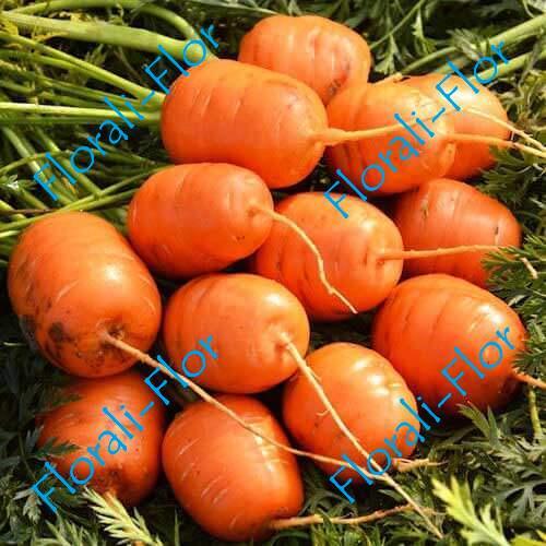Морковь Парижская каротель 0,5 г