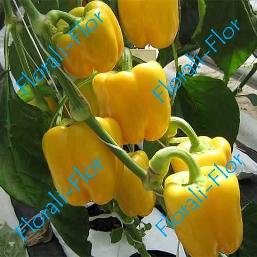 Перец сладкий Желтый букет 0,2 г