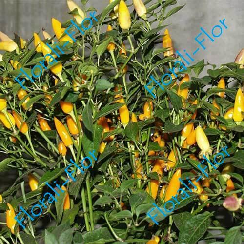 Перец сладкий кустарниковый Жёлтый бум 0,2 г
